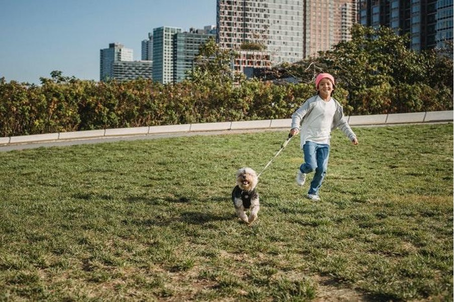Mascotas en la propiedad horizontal: normas, restricciones y multas