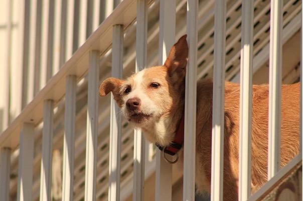 Mascotas en la propiedad horizontal: regulaciones y normas